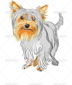 Closeup color sketch dog Yorkshire terrier breed red and black. Hipster dog Yorkshire Terrier breed in a Straw boater and bow tie. Silky Terrier, Yorkshire Terriers, Dog Vector, Vector Art, Color Vector, Terrier Breeds, Dog Breeds, Hipster Dog, Black Hipster