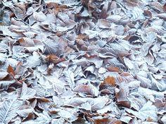 Frozen leaves at Mount Stewart