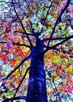 Beautiful Tree ~ Dreamy Nature