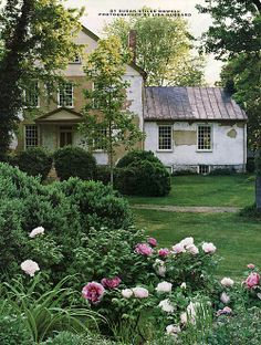 Inspired by a visit to Beijing's Summer Palace, where he spied the last empress' peony garden, historian William Howard Adams planted 40 tree peonies at his Shenandoah Valley house, Hazelfield.