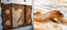 All About Termites #termite #pestcontrol