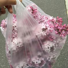 Imagen de flowers, pink, and aesthetic Flower Aesthetic, Pink Aesthetic, Aesthetic Drawing, Kpop Aesthetic, All The Bright Places, No Rain, Aesthetic Vintage, My Flower, Pretty Flowers
