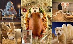 Yappy Christmas to all our readers... from the terrier who is starring in her own festive greetings cards