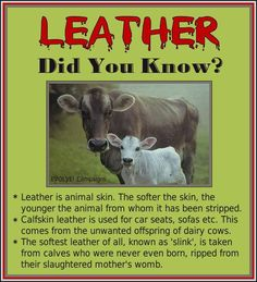 Did You Know? It is important to know the products that you purchase everyday - where they come from and that your voting for an innocent animal to be harmed.
