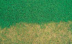 Microclover: Klee statt Rasen -  Eine Rasenfläche, die nicht mehr gedüngt oder bewässert werden muss und trotzdem schön grün ist? Mit einem speziellen Weißkleerasen ist das möglich.