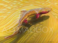 Strawberry Cutty 2. Oil on Belgian linen. One of my favorites to paint www.admaddox.com #admaddoxart #artoftheday #oilpaintingsforsale #cutthroattrout #strawberryriver #utahflyfishing
