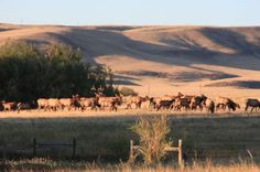 """Income opportunities are as abundant as antelope on Wyoming's Thunder Basin Ranch, located only minutes west of Cheyenne. Investors looking for a producing cattle ranch that also has """"sky's-the-limit"""" potential as a hunting, energy or development property need look no further than the rolling hills of Thunder Basin Ranch."""