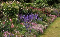 English flower border with early roses and companion plants like blue campanulas, foxgloves and dianthus