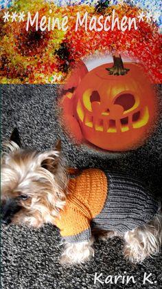 KCA30 Samhain Pullover für den kleinen Hund Merino von *** Meine Maschen *** auf DaWanda.com