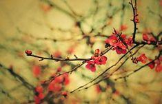 30 de poze cu flori minunate