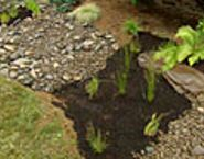 How to plant a flower bed in clay soil