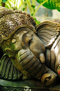 Ganesh in the Garden  ~~ Houston Foodlovers Book Club