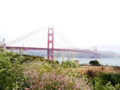 Tips for Travel and What to See in San Francisco