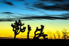 Joshua Tree Photo by Sungjin Ahn — National Geographic Your Shot