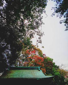 ぷち紅葉  #日本 #秋 #冬 #雨 #空 #雲 #風景 #ダレカニミセタイソラ #写真好きな人と繋がりたい #空好きな人と繋がりたい #autumn #winter #leaves #instagram #japan #landscape #igers #igersjp #sky #clouds #photo #ig_japan #icu_japan #instagramers #photooftheday #picoftheday #insta #instasky #instagood #instadaily