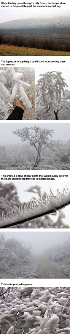 """""""The Deadly Fog - I don't know how deadly it may be, but it's also known as hoarfrost. I've never seen it this profoundly thick before. Usually, it's delicate crystals in long branches everywhere. This is a form I've not seen before, which makes it all the more interesting."""" - Ooooh..."""