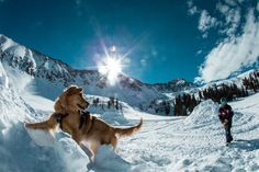 Love it! || Avalanche Dogs: Meet the Four-Legged Heroes of The Slopes