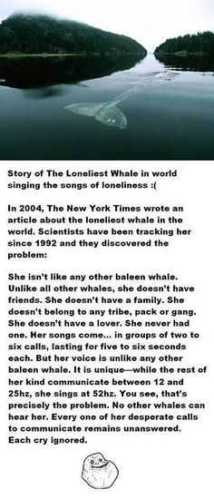 The loneliest whale in the world - Correction: This is actually a male, not female whale.