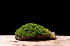moss Stone