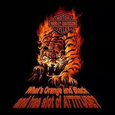 Delicieux David Uhlu0027s HD Tiger