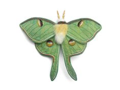 Incredible textile moth from Betsie Withey's Flickr