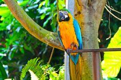 Bird . at bali