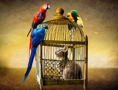Cat in a Bird Cage Photo Canvas Art Repro Mobiles, Canvas Frame, Canvas Art, Microsoft Office 365, Illustrations, Bird Illustration, Photo Canvas, Bird Cage, Bird Watching