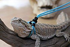 , Here are 5 fun activities for bearded dragons. Entertain your bearded dragon and. , Here are 5 fun activities for bearded dragons. Entertain your bearded dragon and develop a better relationship by using these five activities. Reptiles, Pet Lizards, Bearded Dragon Supplies, Classroom Pets, Bearded Dragon Cage, Pet Dragon, Guinea Pig Toys, Thing 1, Dog Agility