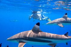 Bora Bora Snorkeling Activities