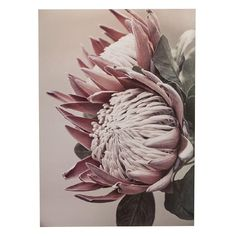 This protea print is the perfect piece of artwork to help bring the outdoors in and add a pop of pink to your walls The Warehouse Protea Art, Protea Flower, Rose Gold Wallpaper, Buy Art Online, Flower Art, Art Flowers, Affordable Art, Christmas Photos, Vintage Flowers