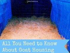 All You Need to Know About Goat Housing | ChickenGateway.com