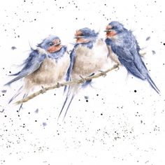 Another lovely greeting card from Wrendale Designs. Card is printed on high quality textured board, blank inside, complete with envelope & sealed in a cellophane wrapper. Watercolor Bird, Watercolor Animals, Watercolor Paintings, Watercolours, Art Aquarelle, Wrendale Designs, Guache, Art Et Illustration, Wildlife Art