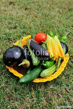 Cesto di ortaggi appena raccolti
