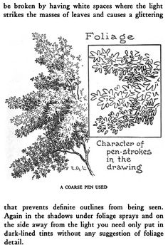 Drawing Trees and Foliage with Pen and Ink