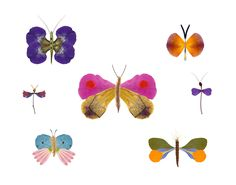 11x14 Flower Petal Butterfly Collection. $20.00, via #Etsy