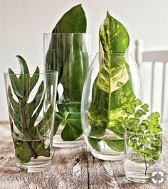 What to put in a glass vase Many original ideas! What to put in a glass vase Many original ideas! When decorating a glass vase we always resort to the typical flowers. Today we also want to propose other simple but very original ideas. Wedding Centerpieces, Wedding Table, Wedding Decorations, Plant Centerpieces, Garden Wedding, Party Wedding, Green Party Decorations, Simple Table Decorations, Church Wedding
