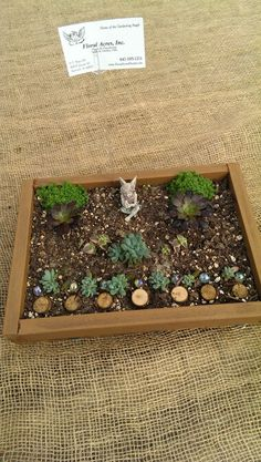 Fairy Garden. Planter box from recycled wood, mixed succulents, marbles, miniature logs and miniature garden fairy