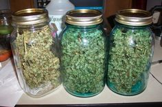 homemade marijuana grow box howto