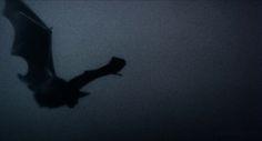 Bat in Nosferatu: Phantom der Nacht, 1979
