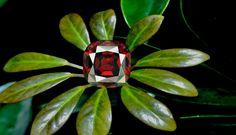 Fifty Six Carat Rhodolite Garnet from Tanzania. Beautiful.