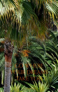 Go where your dreams take you - wallpaper by May Mail Cards Ipad, Iphone, Dreaming Of You, Dreams, Digital, Plants, Cards, Quotes