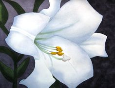 white lily flower watercolor painting by Lynn Pratt