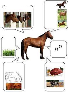 * Het paard! 8-12
