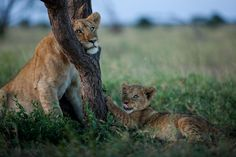 Tree Hugger PHOTOGRAPH BY MICHAEL NICHOLS, NATIONAL GEOGRAPHIC CREATIVE