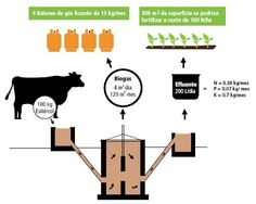 Estimation of biogas and biofertilizers in a farming operation that has 10 cattle. - The basics for understanding the biogas | Agricultural Network