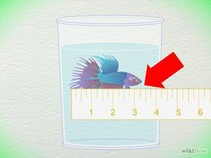 How to Tell How Old a Betta Fish Is: 5 Steps