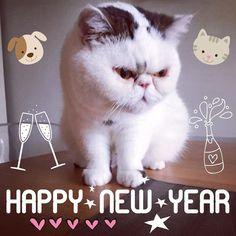 Happy New Year! Here is to a fab Lou Instagram, Happy New Year, News, Animals, Animales, Animaux, Animal, Animais, Happy New Year Wishes