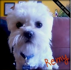 Cuteness.com  - Remy