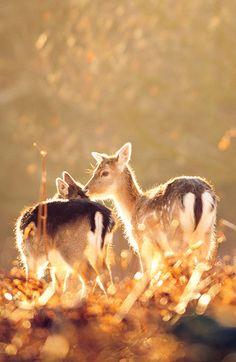 little deers