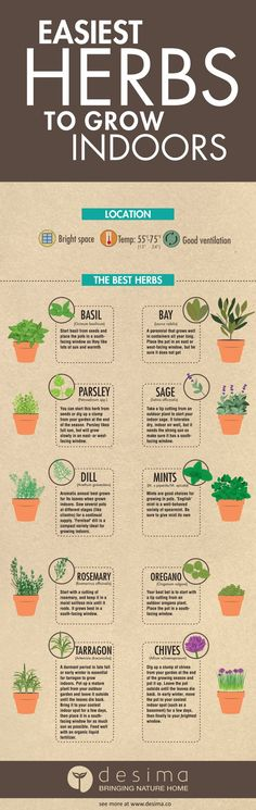 Infographic on the easiest herbs to grow indoors.